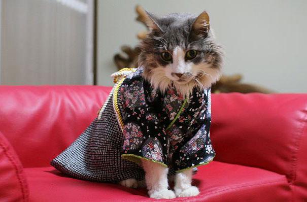 gatos-kimonos-japon (11)