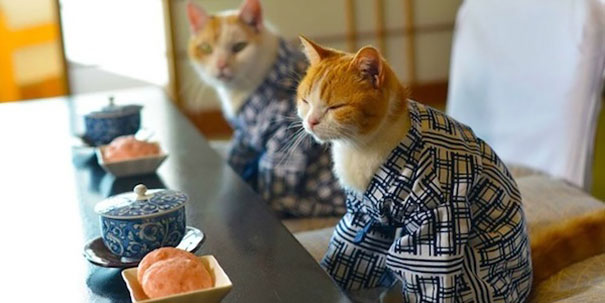 gatos-kimonos-japon (17)