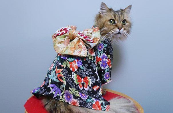 gatos-kimonos-japon (21)