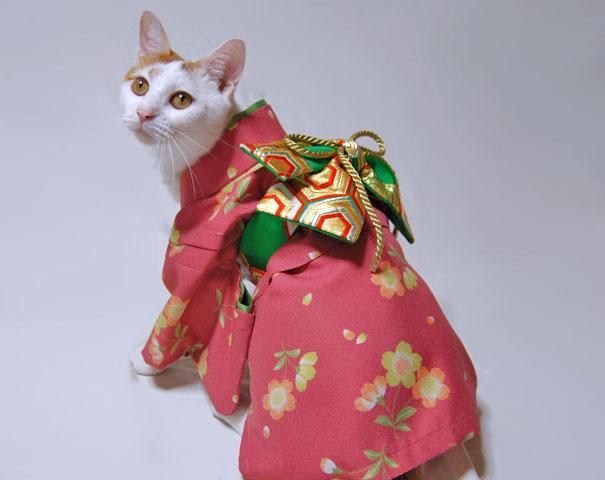 gatos-kimonos-japon (6)