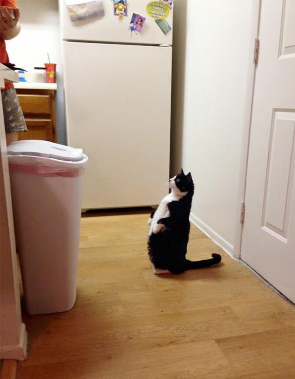 gatos-mayores-adoptados (1)