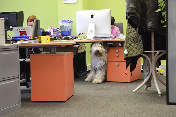 lleva-tu-perro-al-trabajo (4)