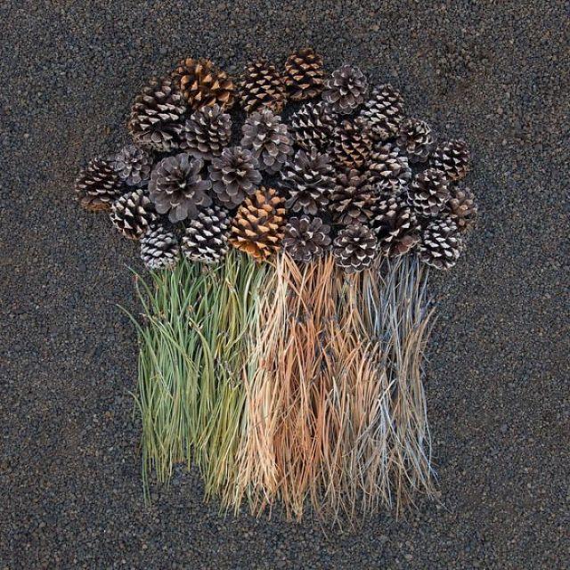 objetos-cotidianos-ordenados-emily-blincoe (4)