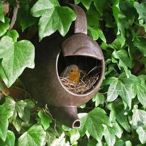 pajaros-nidos-sitios-inusuales (17)