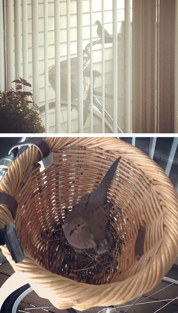 pajaros-nidos-sitios-inusuales (3)