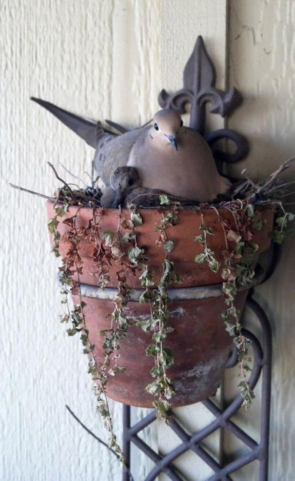 pajaros-nidos-sitios-inusuales (30)
