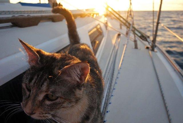 pareja-viajes-mundo-barco-gato-matt-jessica-johnson (15)