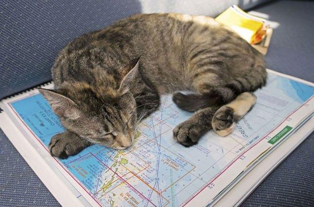 pareja-viajes-mundo-barco-gato-matt-jessica-johnson (22)