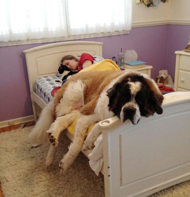 perros-durmiendo-camas-duenos (14)