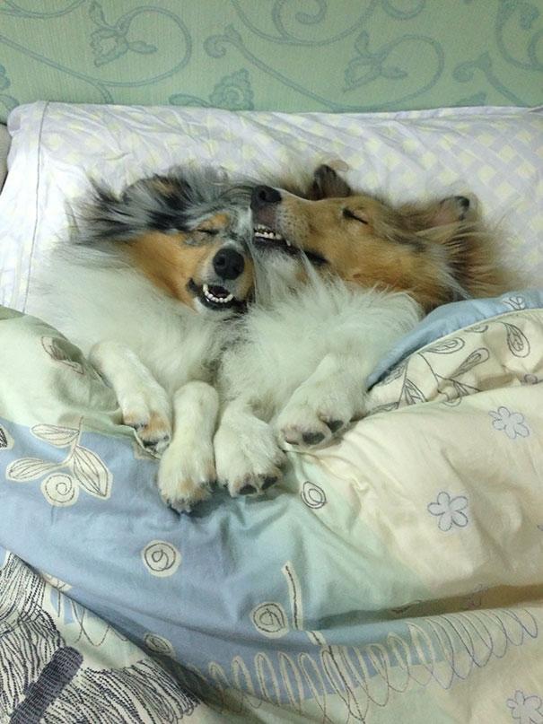 perros-durmiendo-camas-duenos (3)