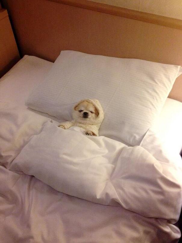 perros-durmiendo-camas-duenos (5)