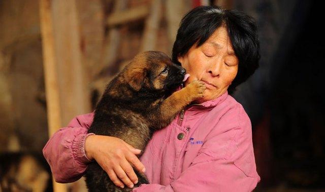 perros-rescatados-festival-yulin-china (16)
