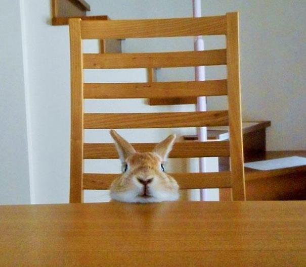 problemas-personas-bajas-conejo-koron-japon (3)