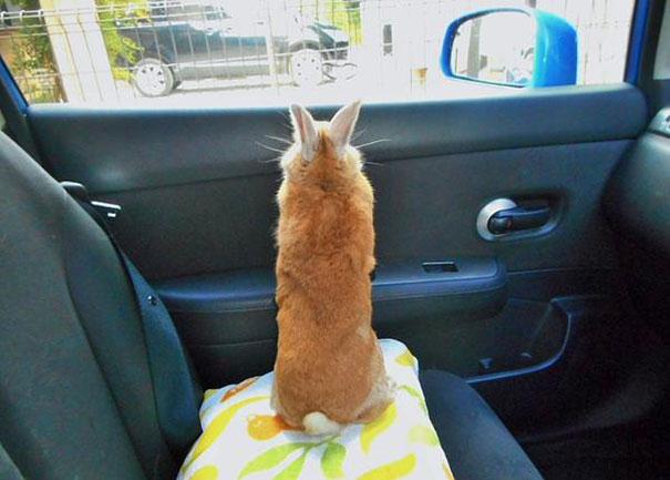 problemas-personas-bajas-conejo-koron-japon (7)
