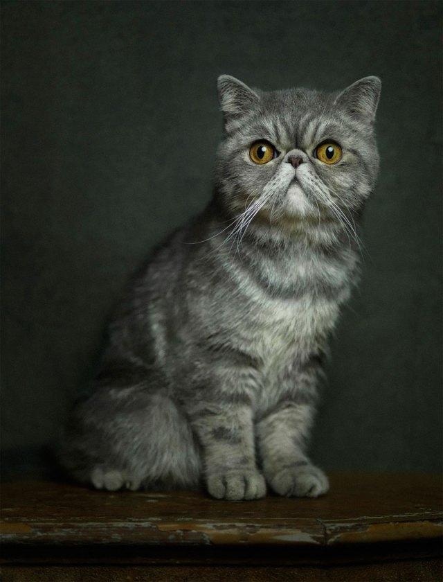 retratos-animales-emociones-humanas-vincent-lagrange (11)