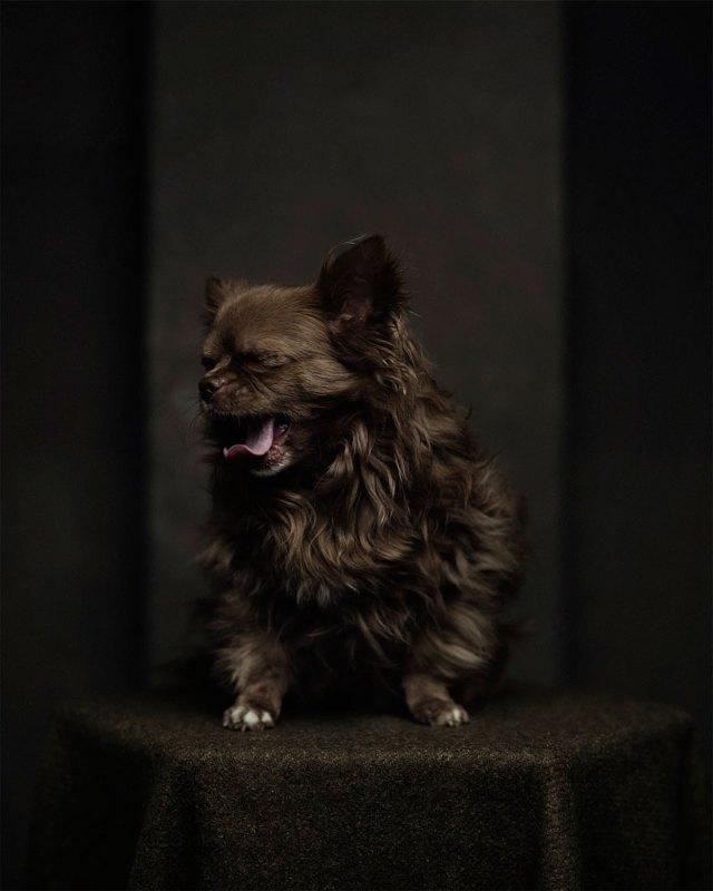 retratos-animales-emociones-humanas-vincent-lagrange (4)