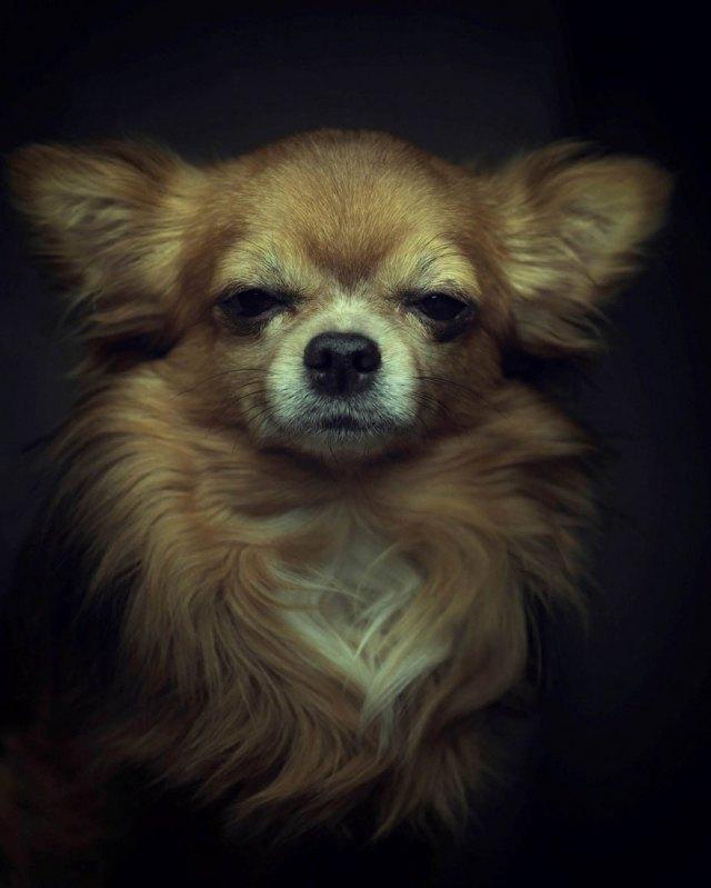retratos-animales-emociones-humanas-vincent-lagrange (5)