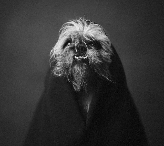retratos-animales-emociones-humanas-vincent-lagrange (6)