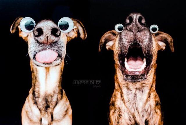 retratos-expresivos-perros-elke-vogelsang (10)