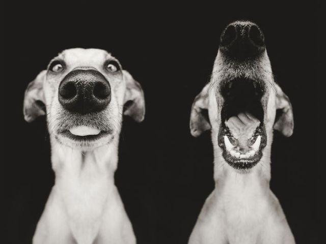 retratos-expresivos-perros-elke-vogelsang (18)