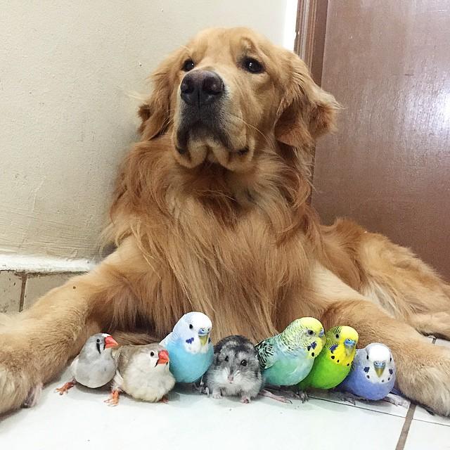 amistad-animal-bob-perro-pajaros-hamster (16)