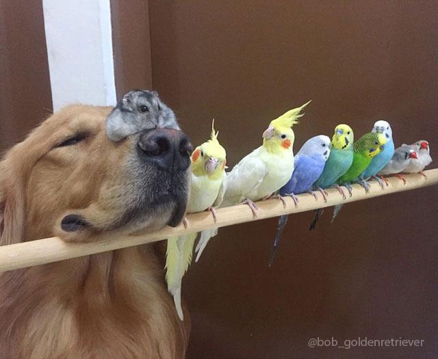 amistad-animal-bob-perro-pajaros-hamster (3)