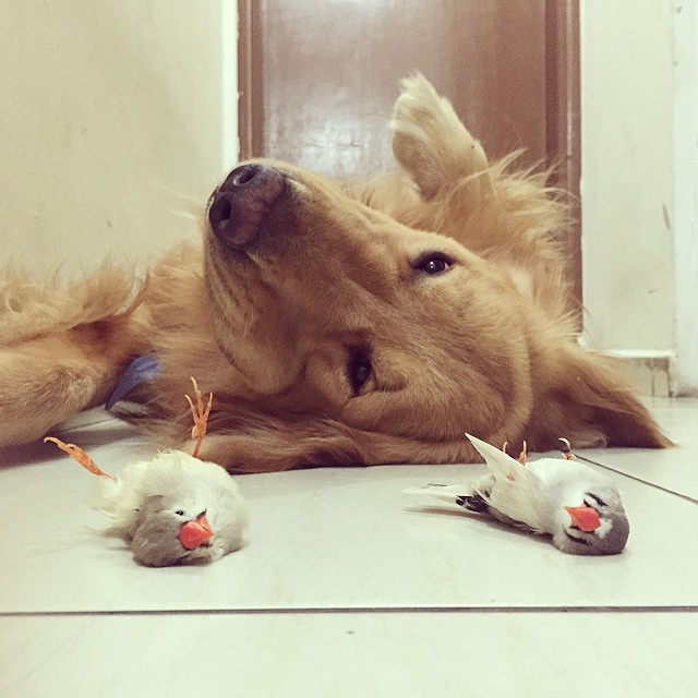 amistad-animal-bob-perro-pajaros-hamster (5)