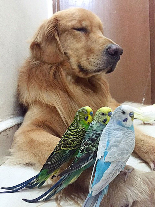 amistad-animal-bob-perro-pajaros-hamster (6)