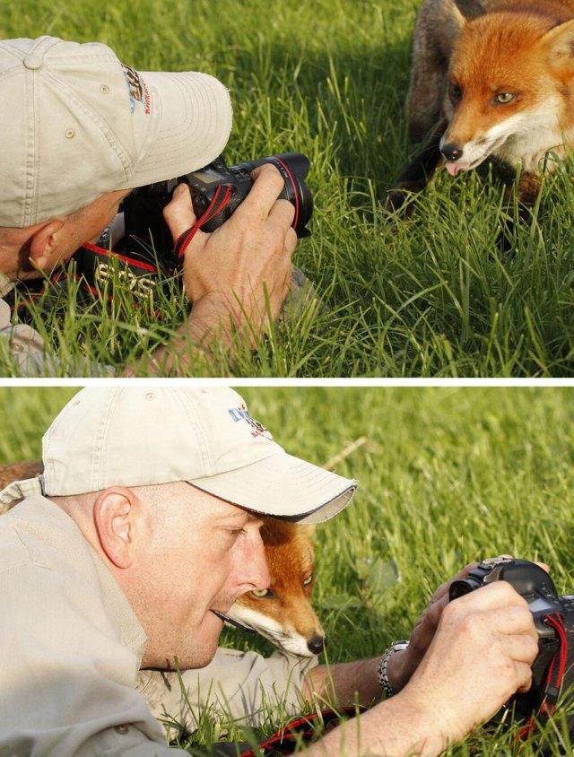 animales-camara-ayudando-fotografos (11)