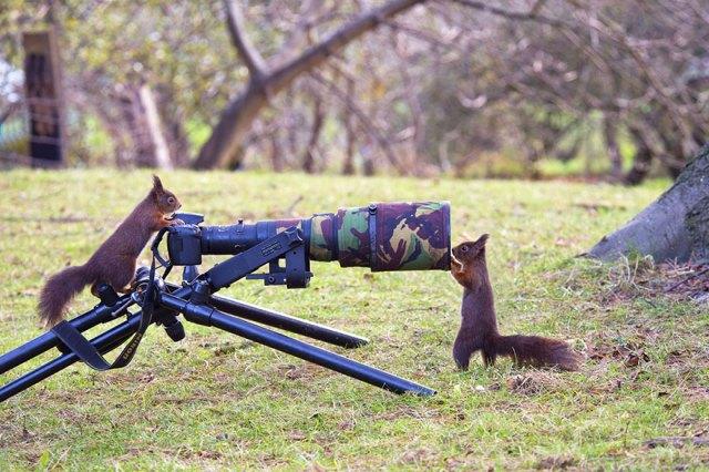 animales-camara-ayudando-fotografos (19)