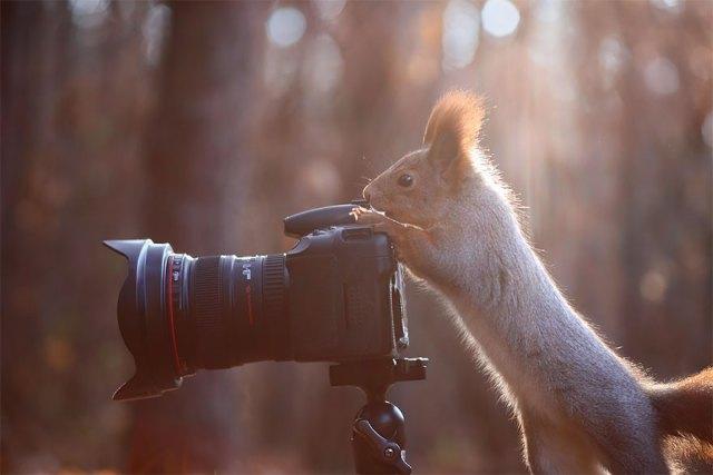 animales-camara-ayudando-fotografos (7)