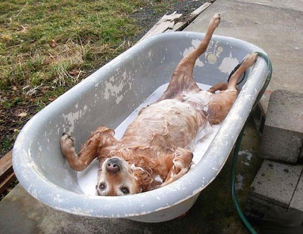 animales-disfrutando-bano (7)