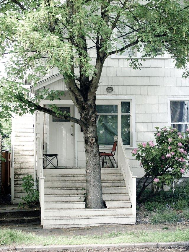 arquitectura-alrededor-arboles (6)
