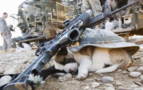 cachorros-perro-durmiendo (10)