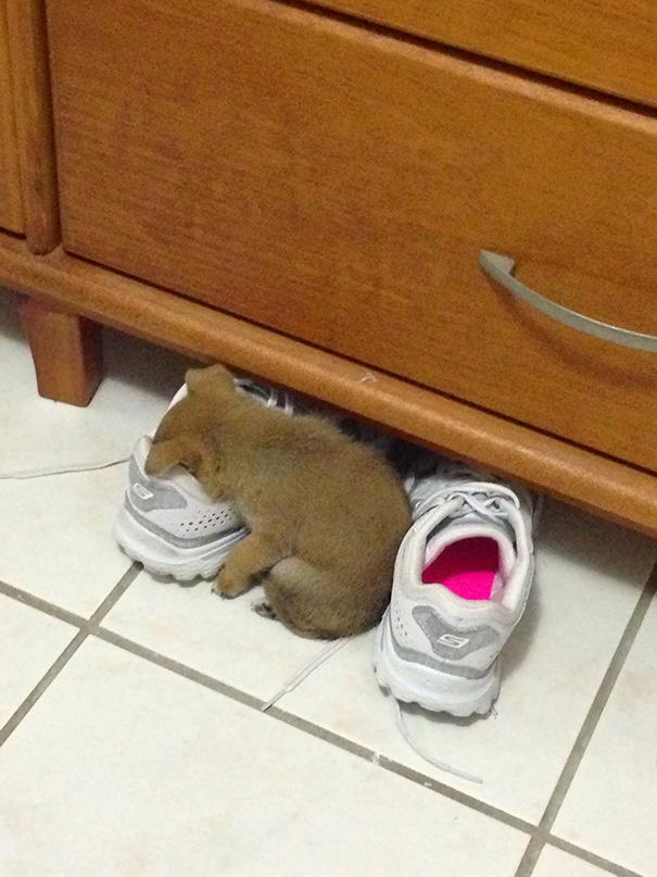 cachorros-perro-durmiendo (15)