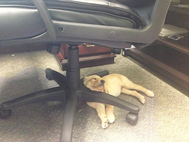 cachorros-perro-durmiendo (5)