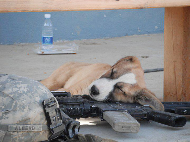 cachorros-perro-durmiendo (9)
