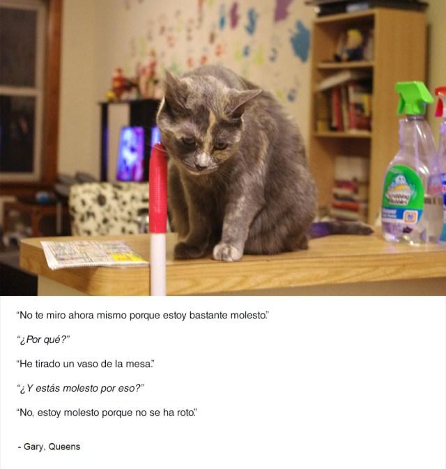 felinos-de-nueva-york-blog-jim-tews-2