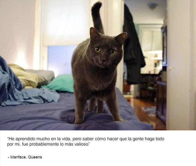 felinos-de-nueva-york-blog-jim-tews-4