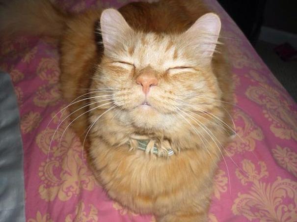 gatos-sonrientes (1)