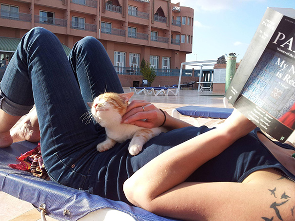 gatos-sonrientes (18)