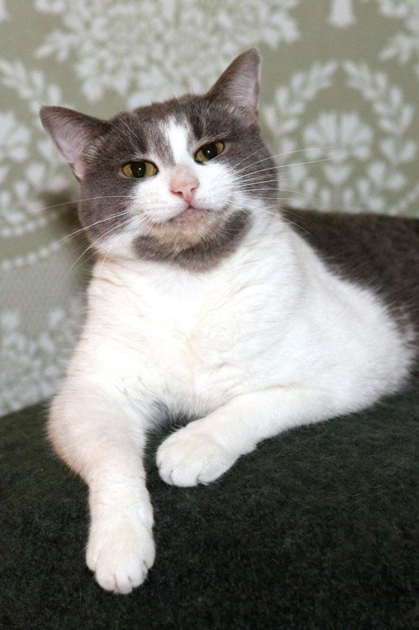 gatos-sonrientes (6)