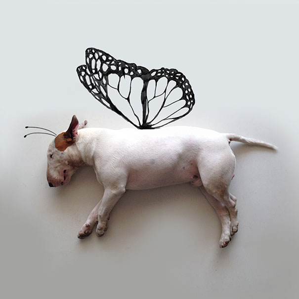 ilustraciones-interactivas-perro-jimmy-choo-rafael-mantesso (9)