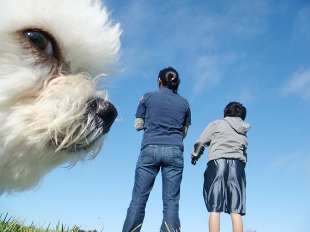 perros-gigantes-ilusion-optica (10)