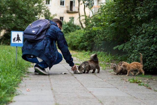 senales-trafico-diminutas-animales-clinic-212 (3)