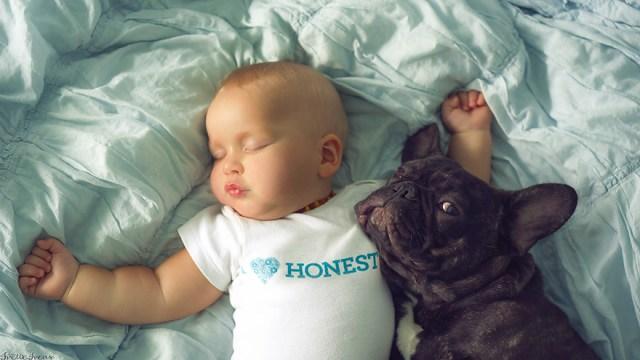 amistad-bebe-dilan-bulldog-farley-ivette-ivens (5)