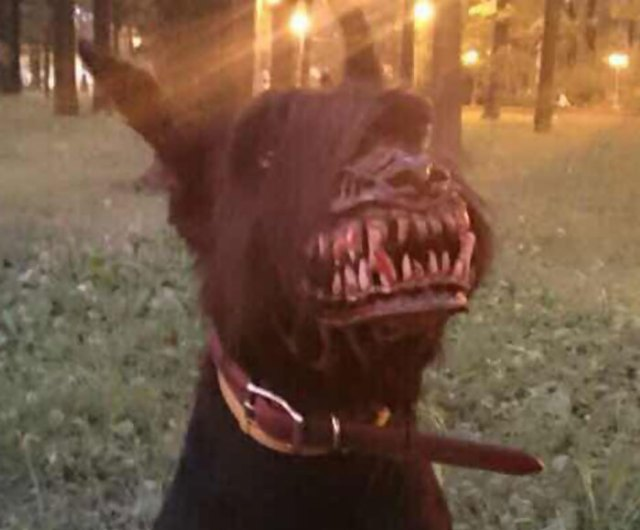 bozal-ruso-perros-licantropo (1)