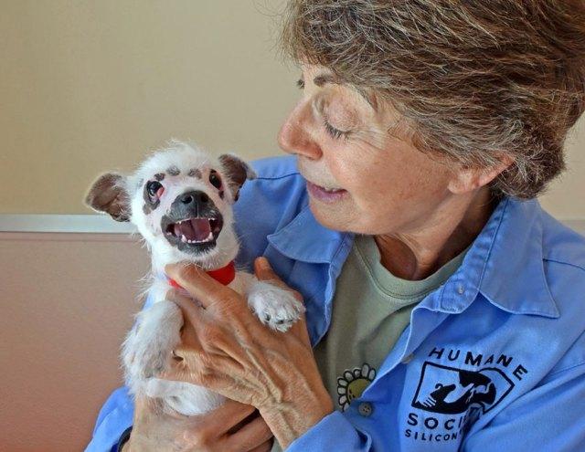 cachorro-perro-cicatrices-adoptado-hssv-christine-doblar (3)