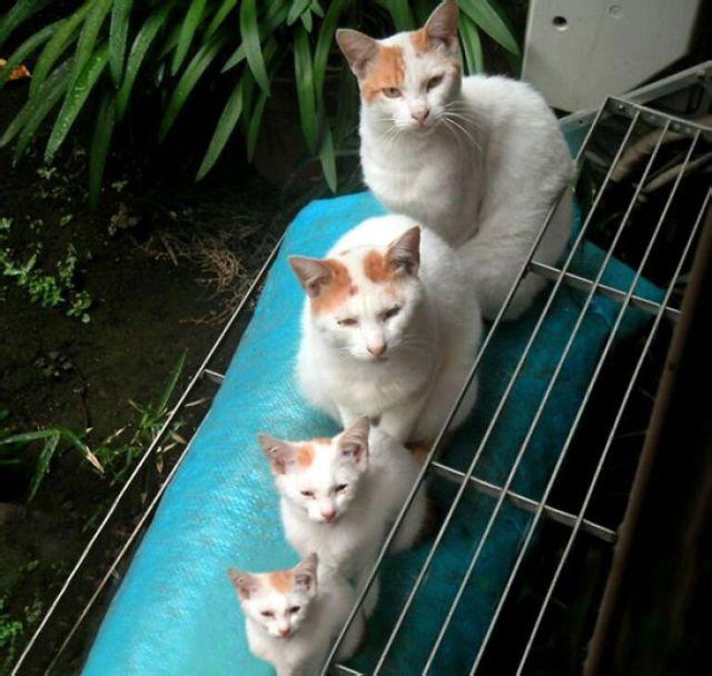 fotos-familia-gatos-gatitos (2)