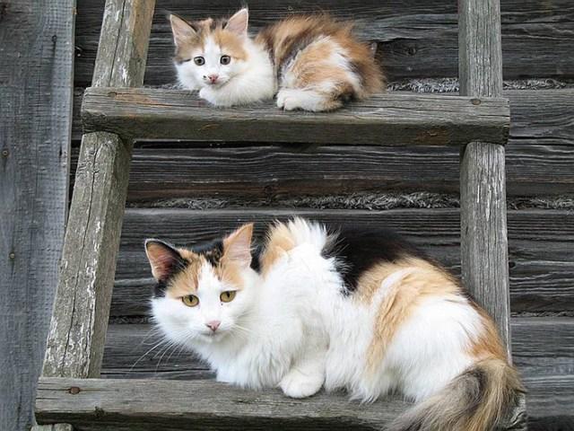 fotos-familia-gatos-gatitos (5)